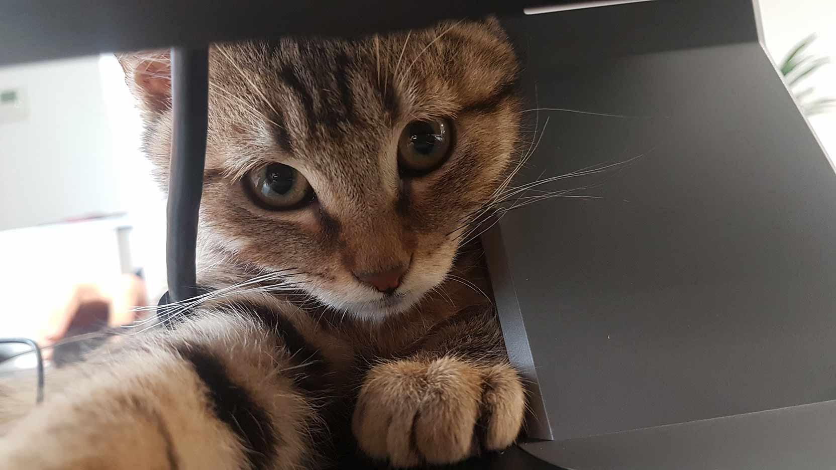 Snap, un chat dans l'open-space