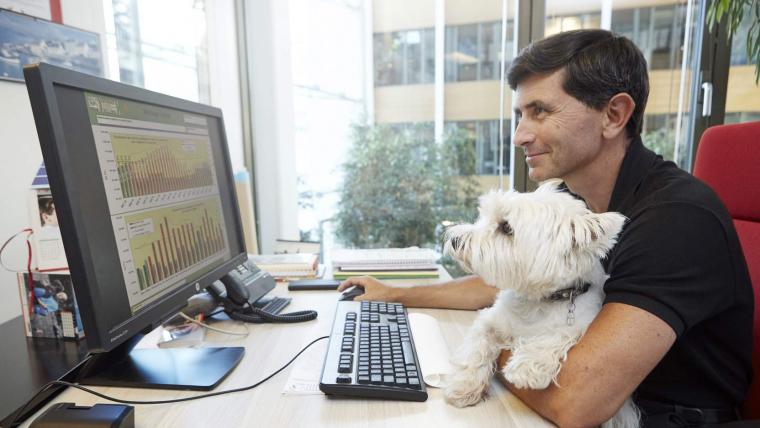 Pets at work ou les bienfaits des animaux au bureau