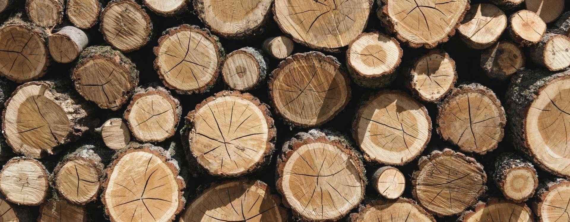 Le bois dans la construction, un matériau qui a de l'avenir