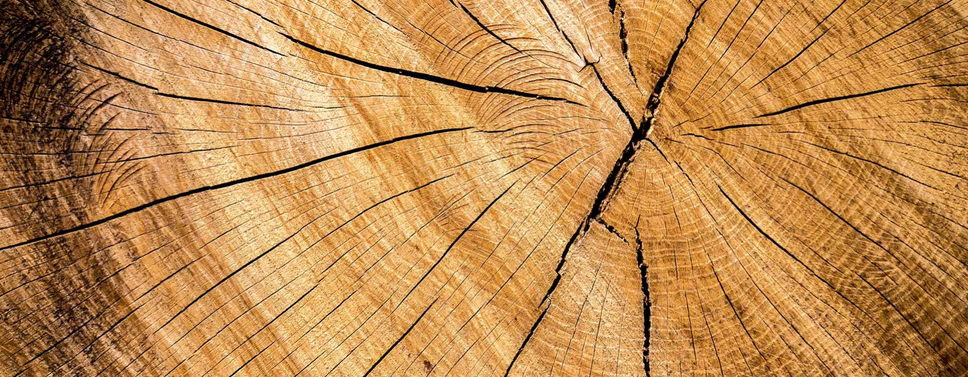 « Privilégier la mixité des matériaux : bois, béton et métal »
