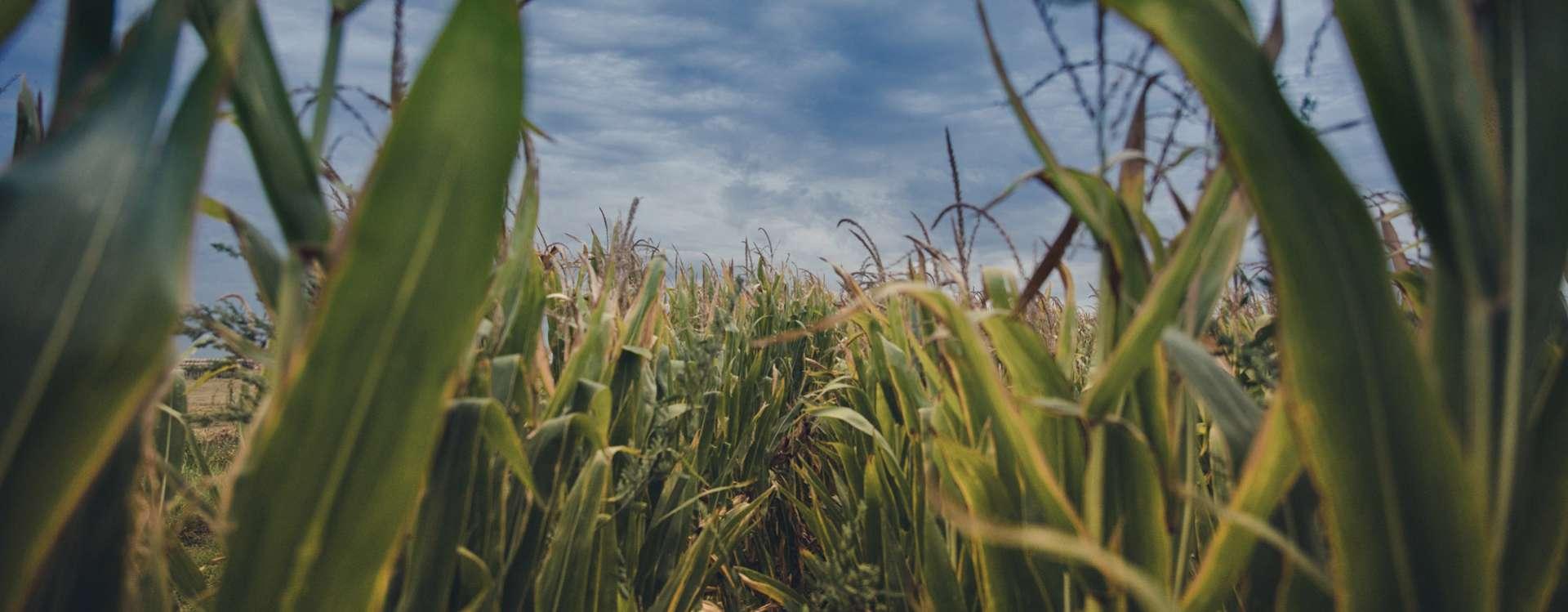 Quand les plantes redonnent la vie aux friches industrielles