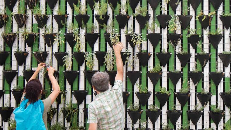 Nous, les plantes et le bien-être au travail