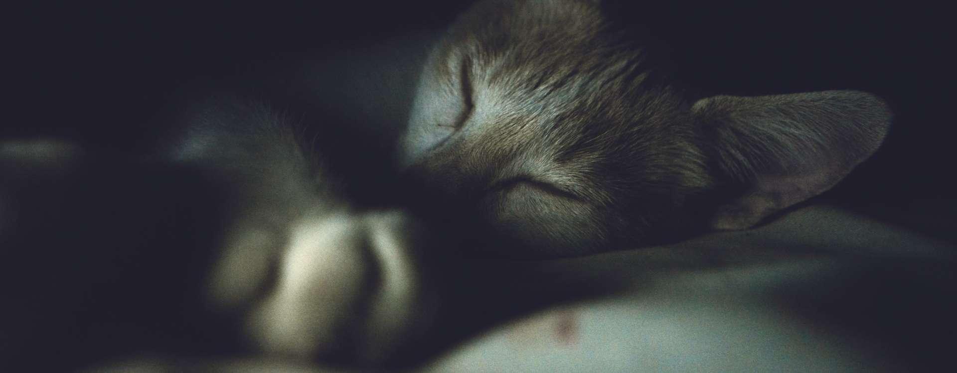 Des bienfaits de la sieste au travail